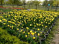 Ansan Lake Park Spring 2015 21.JPG