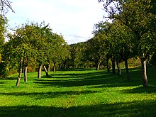 Apple Trees - panoramio (2).jpg
