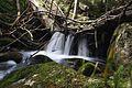 Arbeit des Bibers - zeitlich begrenzter Wasserfall.jpg