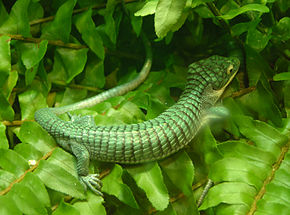 Description de l'image Arboreal_Alligator_Lizard_Abronia_graminea_2900px.jpg.