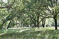 Arc 20130615 Aix-en-Provence 10.jpg