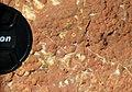 Archaeocyathan limestone (Ajax Limestone, Lower Cambrian; Mt. Scott Range, South Australia) 16.jpg