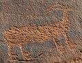 Archaic or Fremont Indian petroglyph (~6000 B.C. to ~1300 A.D.) (Potash Petroglyphs, along the Colorado River, eastern Utah, USA) 8 (22840614935).jpg