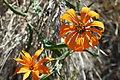 Argentina - Frey climbing 77 - wildflowers (6962209799).jpg