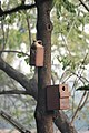 Artificial nest box for birds by Raju Kasambe DSC 8039 (1) 09.jpg