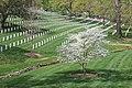 At Arlington National Cemetery.jpg