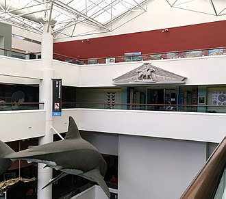 San Diego Natural History Museum - View of the atrium, north side, showing blue whale and entrance to library exhibition.