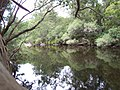 Australian bush river reflection.jpg