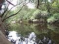 Australian bush river reflection.jpg