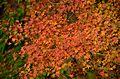 Autumn foliage 2012 (8253641588).jpg