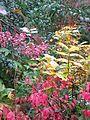 Autumn leaves - Flickr - peganum.jpg