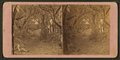 Avenue in Bonaventure, near Savannah, Georgia, from Robert N. Dennis collection of stereoscopic views 4.png