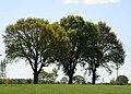 Bäume im Frühling - panoramio.jpg