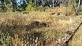 BA-Ruinas villa romana Pesquero. 14.jpg