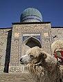 Bactrian camel in Kazakhstan.jpg