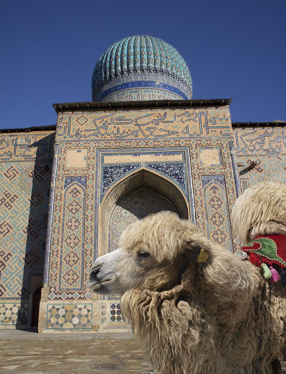 Bactrian camel in Kazakhstan