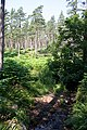 Badentarget Plantation - geograph.org.uk - 204972.jpg