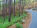 Bageshwar-Kanda road 02.jpg