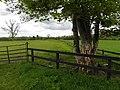 Ballinglough Townland - geograph.org.uk - 1865384.jpg