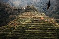 Banaue Rice Terraces 5 by Alyanna Mangahas.jpg