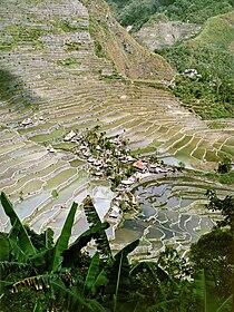 Batad rice terraces.jpg