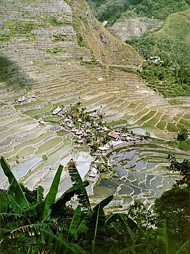 Batad rice terraces.jpg