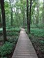 Battle Creek Cypress Swamp 49.jpg