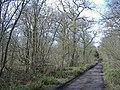 Battlelake wood - geograph.org.uk - 358070.jpg