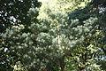 Batumi Botanical Garden (36).jpg