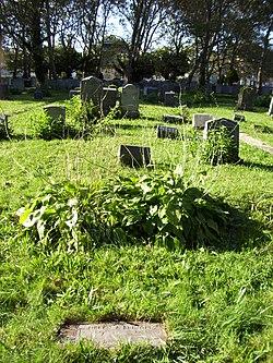 Bayview – New York Bay Cemetery