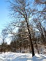 Beach Drive - Flickr - treegrow.jpg