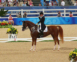 A chestnut (reddish-brown) horse being ridden by a rider in a black coat and top hat. They are stopped in a riding arena with the rider tipping his hat.
