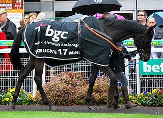 Big Bucks French-bred Thoroughbred racehorse