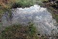 Big Zgorany lake-04-2014-2.JPG
