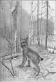 Big wild cat in Northern Canada in 1907.png