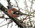 Birds14Slovakia14.JPG