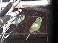 Birds20171111 123607.jpg