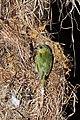 Birds (9774506663).jpg