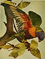 Birds and nature (1905) (14728470966).jpg