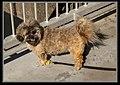 Blind-Deaf Mena still walks with Grandad-1 (8396556869).jpg
