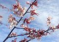 Blossom 771.jpg