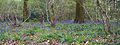 Bluebell Wood 2 (6969986810).jpg