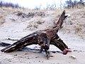 Body of a drown tree - panoramio.jpg