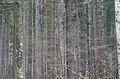 Bosque (4560520027).jpg