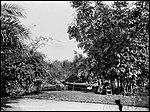 Botanic Gardens, Sydney (2495798485).jpg