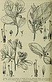 Botanische Jahrbücher für Systematik, Pflanzengeschichte und Pflanzengeographie (1910) (14763144295).jpg