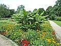 Botanischer Sondergarten Wandsbek Winterharte Banane (3).jpg