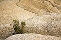 Boulders near Jumbo Rocks campground (15681646514).jpg