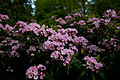 Bouquet-spring-wildlfowers - West Virginia - ForestWander.jpg