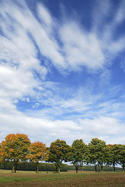 File:Brakel Sattlerland Herbstallee.jpg